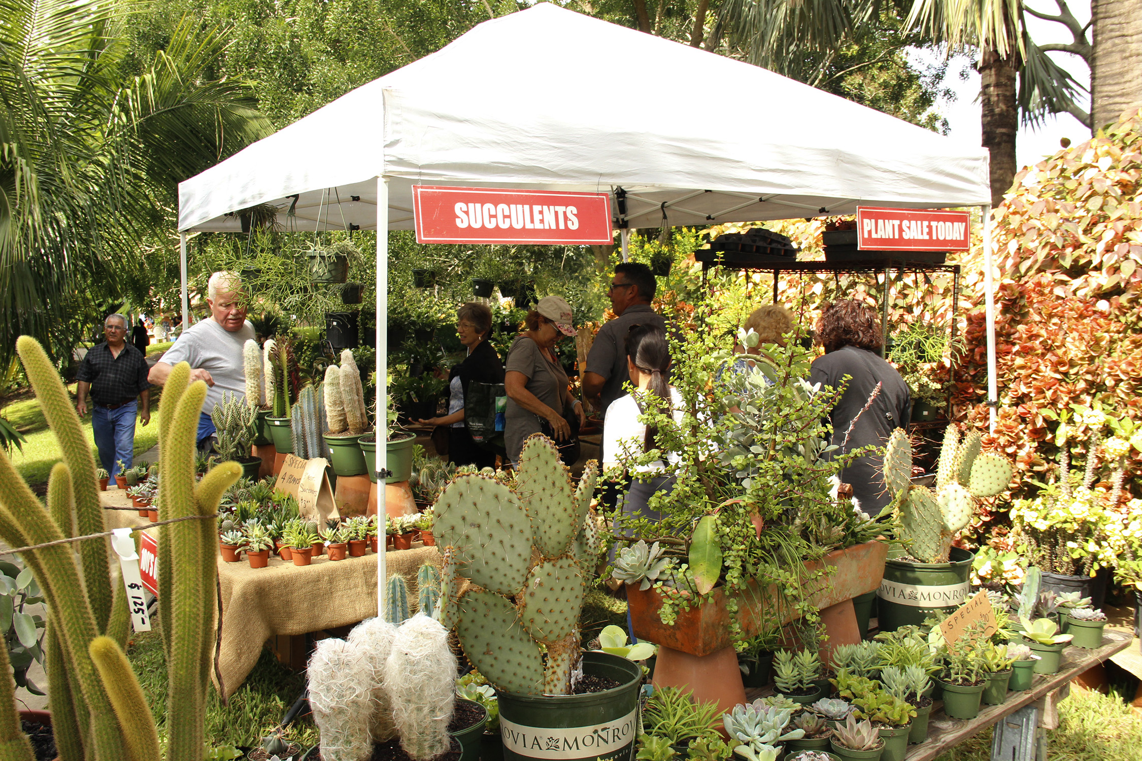 Mounts Botanical Garden of Palm Beach County Announces PLANT-A-PALOOZA 2020